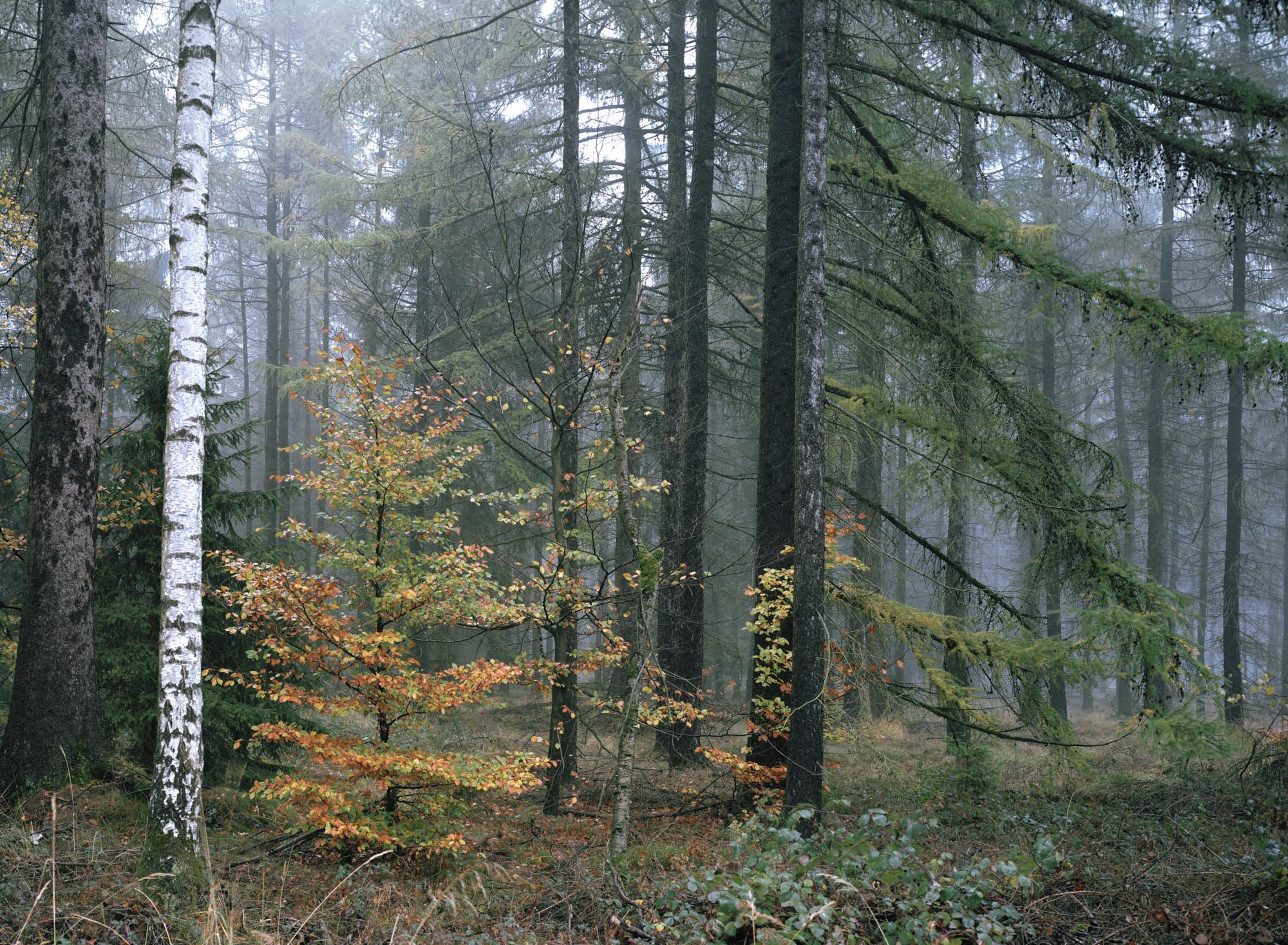 Martin Zellerhoff – Im Wald und an seine Rändern