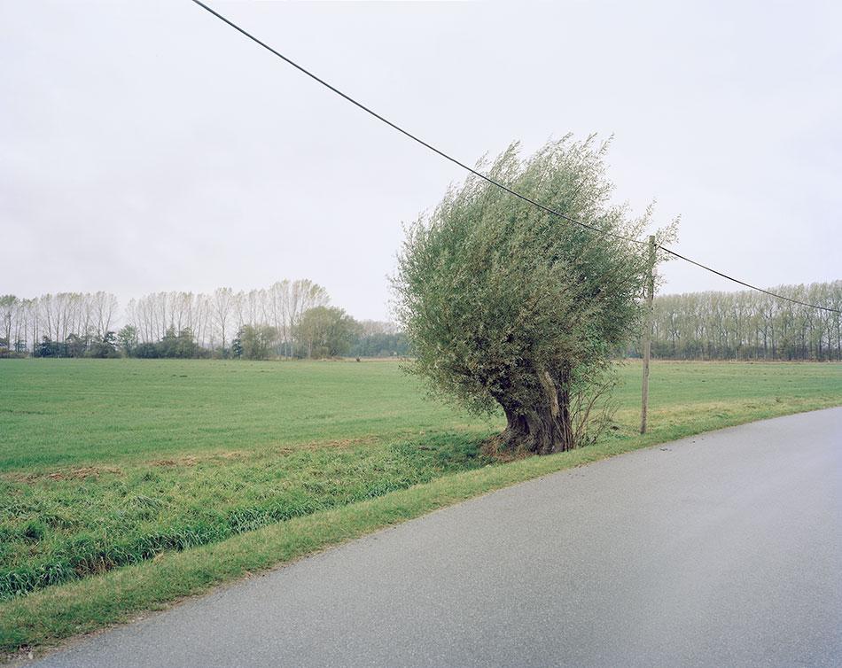 Martin-Zellerhoff-einsamer-Baum